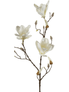 Magnolia Branch Cream 90cm